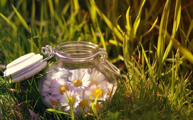 Lee más sobre el artículo Consejos para prevenir las alergias primaverales