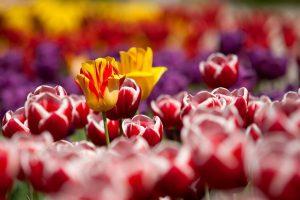 Lee más sobre el artículo 5 plantas de jardín ahora que llega la primavera