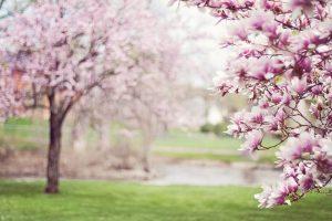 Lee más sobre el artículo Los mejores destinos para viajar en primavera