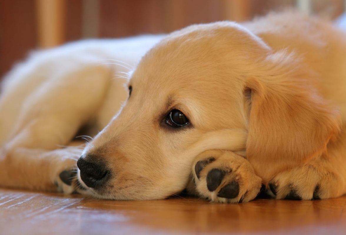Consejos y recomendaciones a la hora de adoptar perros