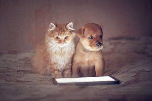 Lee más sobre el artículo Mascotas que nos han conquistado el corazón a través de Instagram ❤