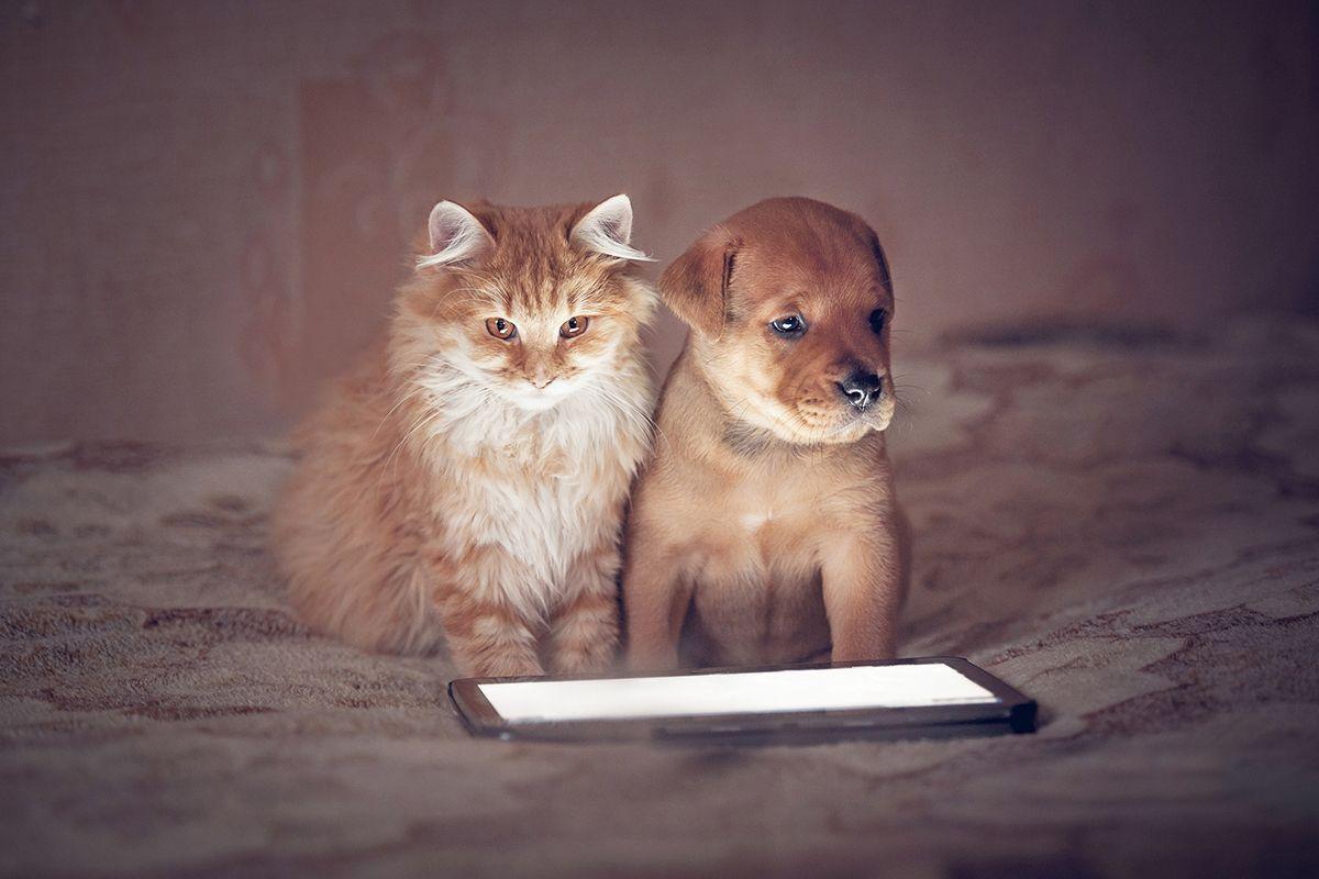 Mascotas que nos han conquistado el corazón a través de Instagram ❤