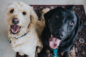 Lee más sobre el artículo Cuida la salud de tu perro en el hogar