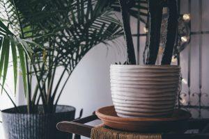 Lee más sobre el artículo Cómo decorar tu casa ahora que ha pasado la Navidad